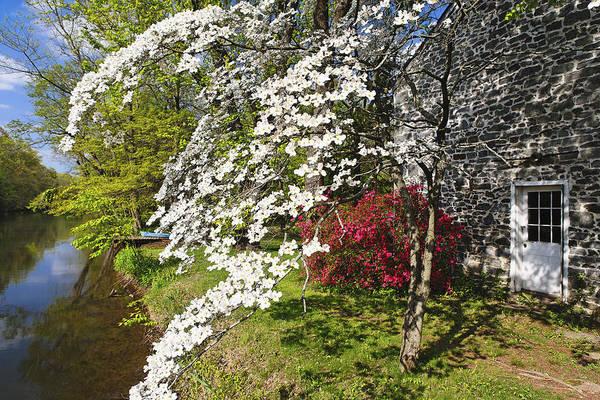 Spring Flower Bloom  Art Print