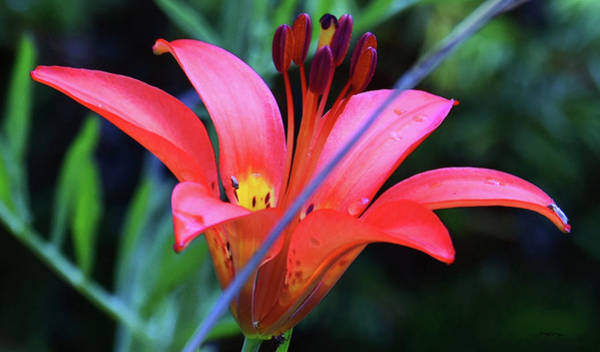 Photograph - Spring Flower by Sally Sperry