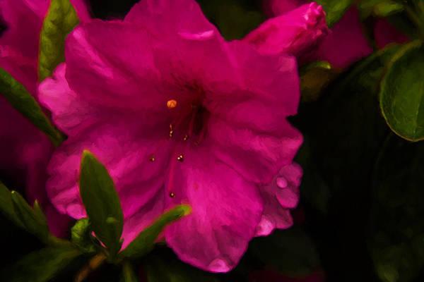 Painting - Spring Flowering Beauty - Azalea Floral by Barry Jones
