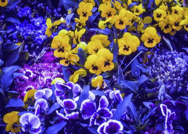 Photograph - Spring Flowers - Bonn by Samuel M Purvis III