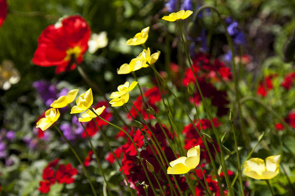 Wild Flowers Photograph - Spring Flowers by Garry Gay