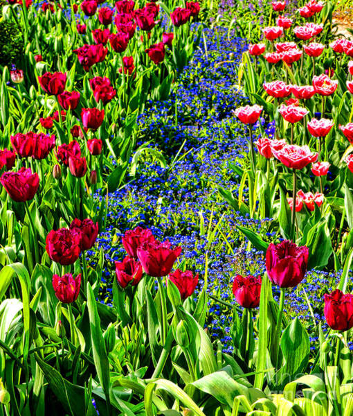 Photograph - Spring Flowers Impression by Olivier Le Queinec
