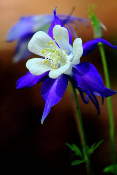 Wall Art - Photograph - Spring Flowers by Kevin Wheeler