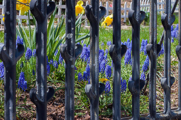 Photograph - Spring Flowers by Kirkodd Photography Of New England