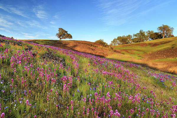 Photograph - Spring Flowers On North Table Mountain by James Eddy