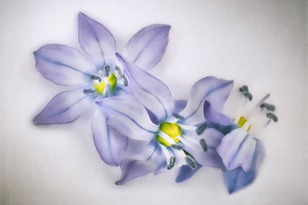 Wall Art - Photograph - Spring Flowers On White by Scott Norris