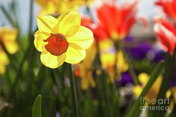 Photograph - Spring Flowers by Tatiana Travelways