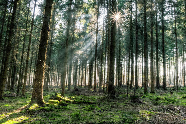 Photograph - Spring Forest Hdr A by Jacek Wojnarowski