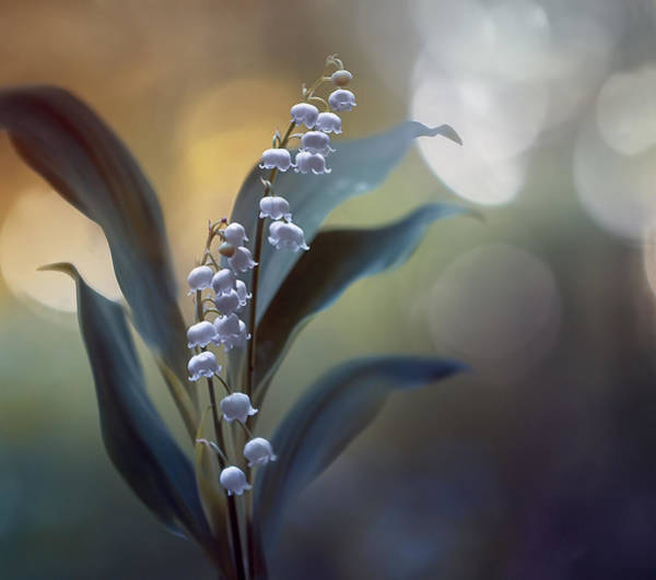 Wall Art - Photograph - White Pearls by Magda  Bognar