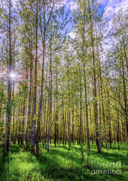 Canada Wall Art - Photograph - Spring Forest. by Viktor Birkus