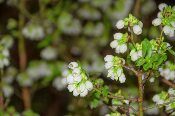 Photograph - Spring Forward by Bill Cannon