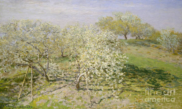 Fruit Trees Wall Art - Painting - Spring, Fruit Trees In Bloom, 1873 by Claude Monet