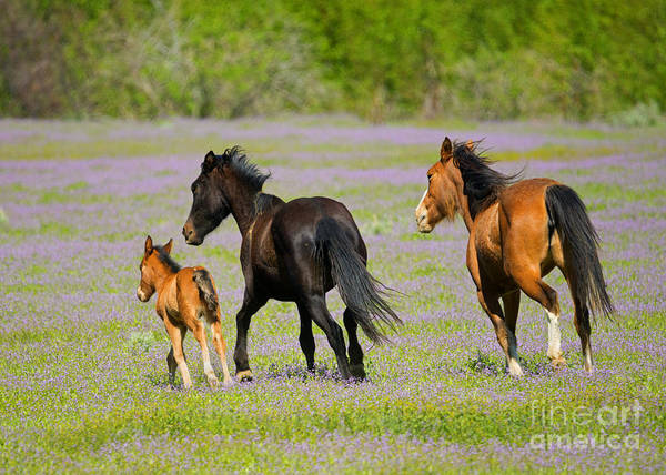 Foal Photograph - Spring Gallop by Mike Dawson