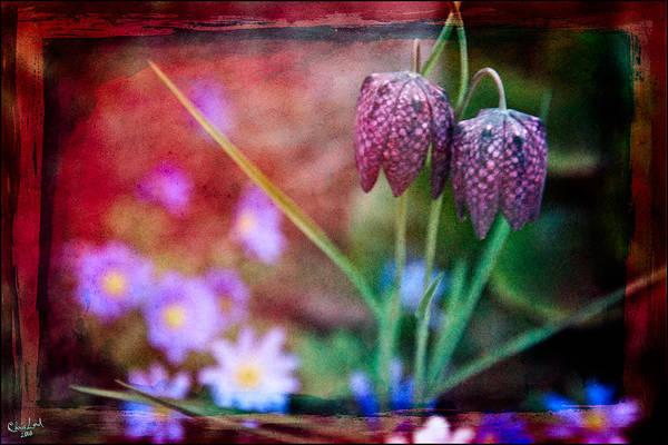 Digital Art - Spring Garden by Chris Lord
