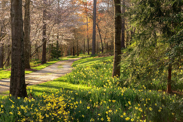 Photograph - Spring Garden Path by Keith Smith