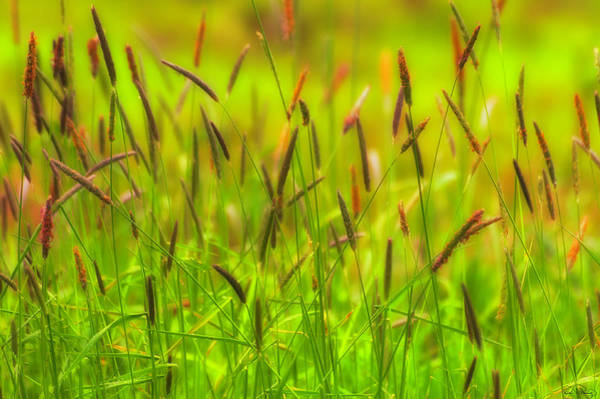 Photograph - Spring Grasses by Dee Browning