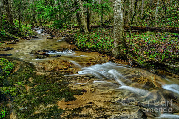 Photograph - Spring Green Along Anthony Creek by Thomas R Fletcher