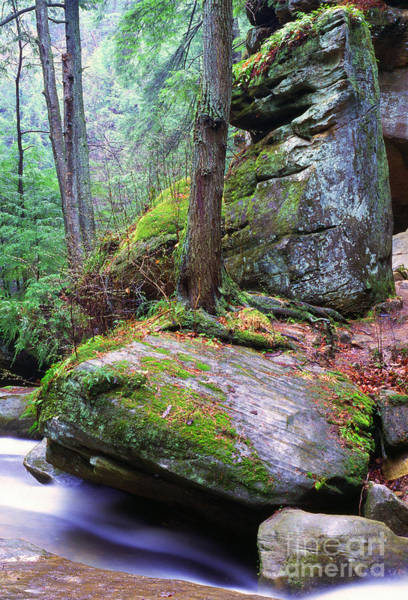 Photograph - Spring Green Hocking Hills by Thomas R Fletcher