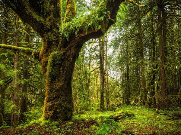 Mount Hood Photograph - Spring Green by Thorsten Scheuermann