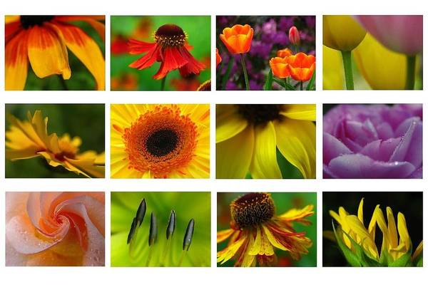 Photograph - Spring Greetings by Juergen Roth