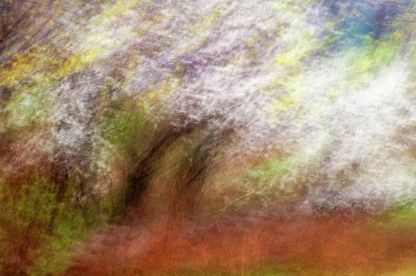 Photograph - Spring Grove by John Whitmarsh