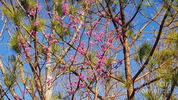 Photograph - Spring Hello by Rachel Hannah