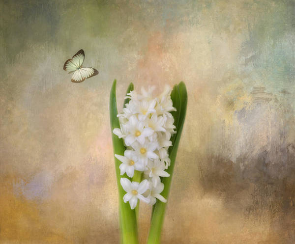 Photograph - Spring Hyacinth by Kim Hojnacki
