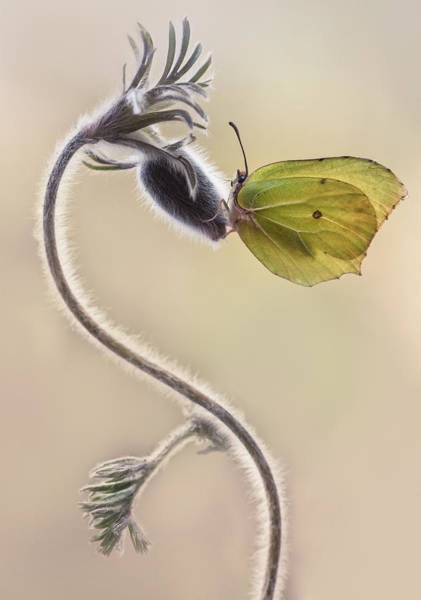 Nature Wall Art - Photograph - Spring Impression With Yellow Butterfly by Jaroslaw Blaminsky