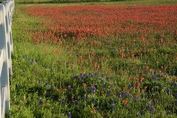 Photograph - Spring In Central Texas by Frank Madia