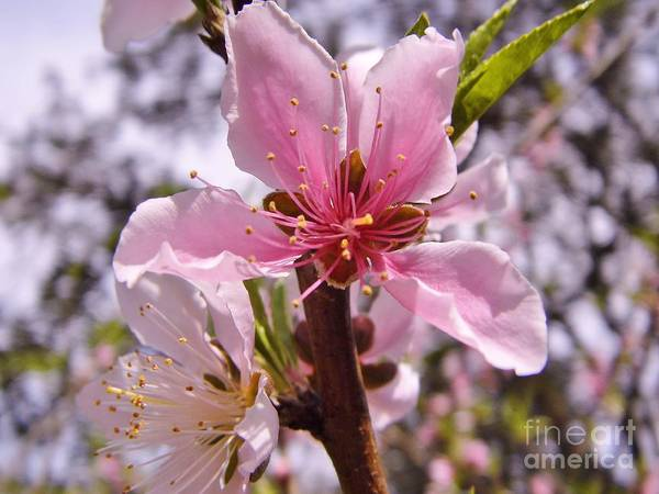 Photograph - Spring In Florida by D Hackett