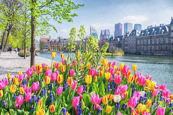 Photograph - spring in historical center of  the Hague city by Ariadna De Raadt
