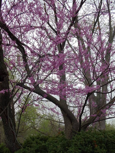 Photograph - Spring In Indiana by Colleen Cornelius
