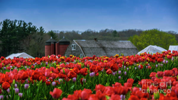 Photograph - Spring In Rhode Island by New England Photography