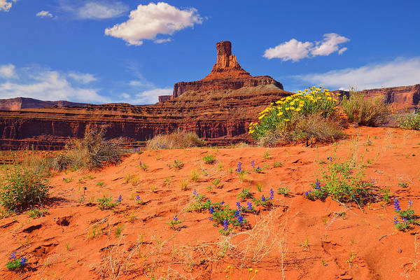 Photograph - Spring In The Canyon by Greg Norrell
