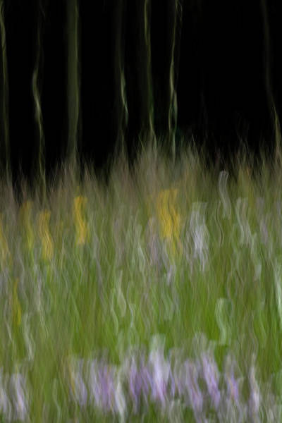 Photograph - Spring In The Deep Forest by Deborah Hughes