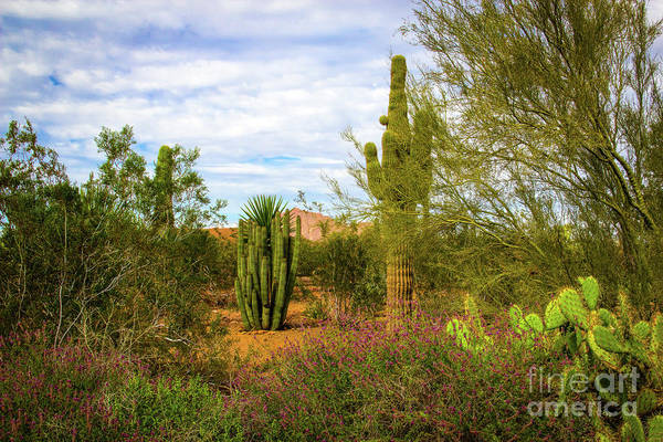 Photograph - Spring In The Desert by Jon Burch Photography