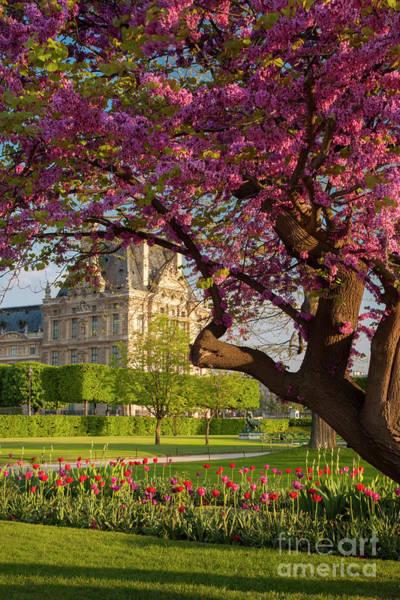 Jardin Des Tuileries Photograph - Spring In The Garden by Brian Jannsen