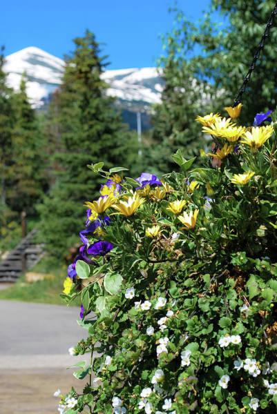 Photograph - Spring In The Mountains - Colorado by Gregory Ballos
