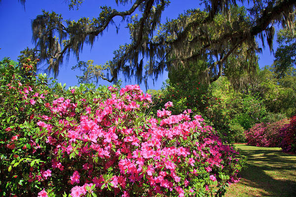 Photograph - Spring In The South by Jill Lang