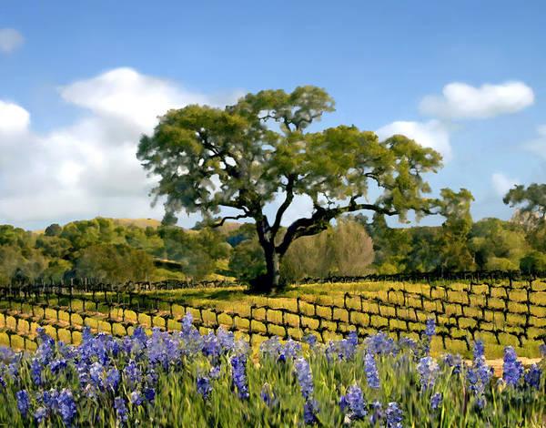 California Oak Digital Art - Spring In The Vineyard by Kurt Van Wagner