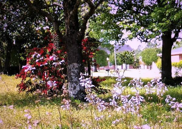 Azalia Photograph - Spring In The Yard by Denise F Fulmer