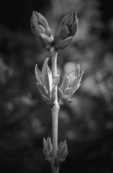 Growing Up Digital Art - Spring Into Action B N W by Richard Andrews