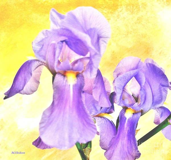 Purple Iris Mixed Media - Spring Irises by Marsha Heiken