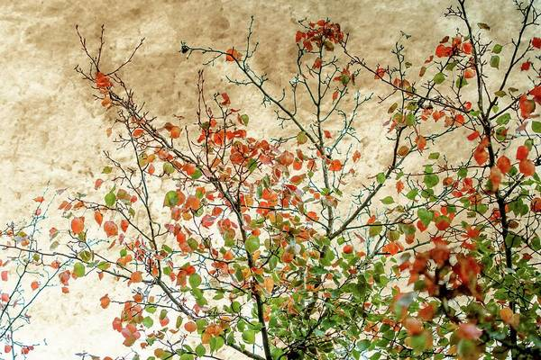Wall Art - Photograph - Spring Is Gone by Az Jackson