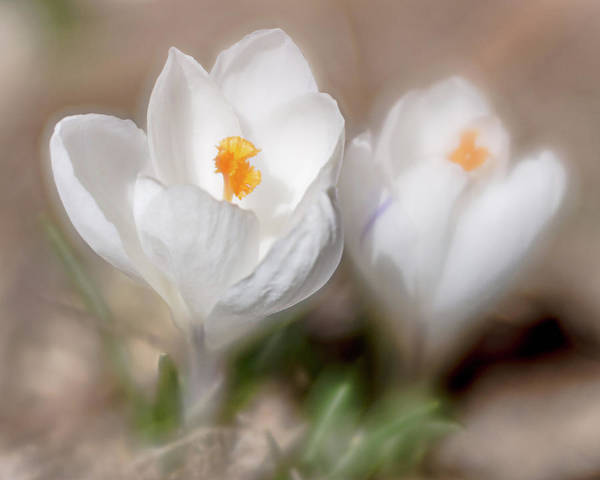Photograph - Spring Is Here by Jennifer Grossnickle
