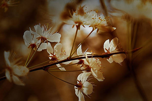 Digital Art - Spring Is In The Air - Floral Landscape by Barry Jones