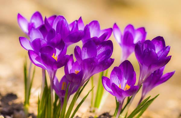 Fleur Digital Art - Spring Is In The Air by Michel Emery