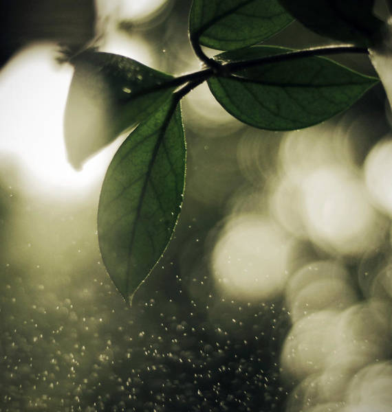 Drops Of Water Wall Art - Photograph - Spring by Art of Invi
