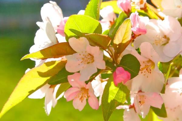 Photograph - Spring Joy by Polly Castor