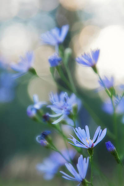 Little Things Photograph - Spring by Kate Livingston